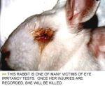 L'Oréal essais sur les animaux