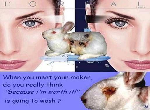 animal testing cruelty pictures. L#39;Oreal#39;s Cruel Animal Testing